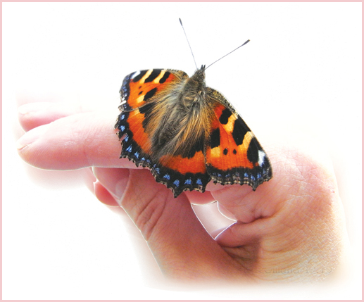 butterfly-hand